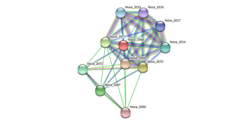 Noca_2068 protein (Nocardioides sp. JS614) - STRING interaction network