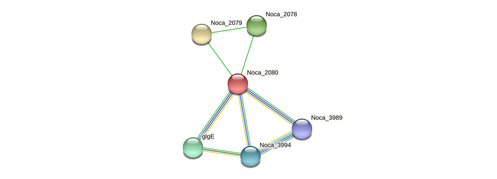Noca_2080 protein (Nocardioides sp. JS614) - STRING interaction network
