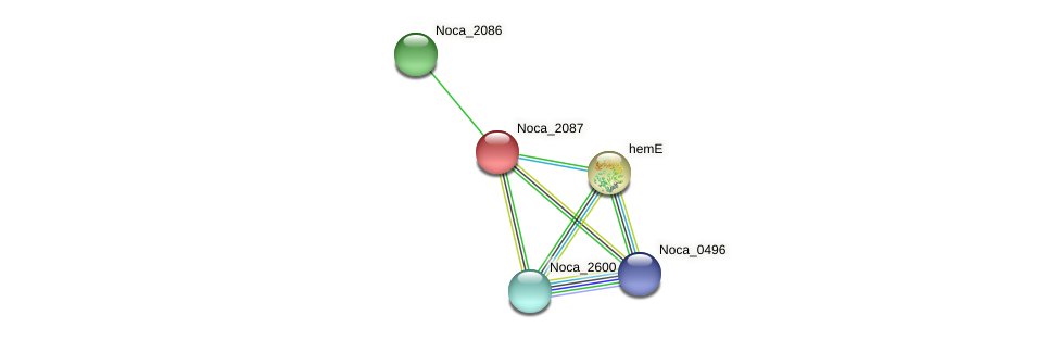 Noca_2087 protein (Nocardioides sp. JS614) - STRING interaction network