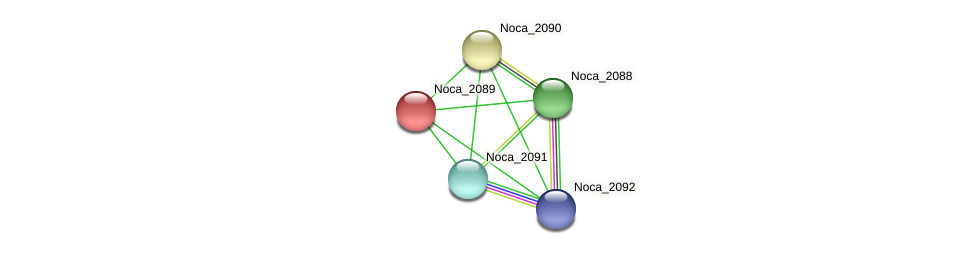 Noca_2089 protein (Nocardioides sp. JS614) - STRING interaction network