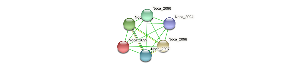Noca_2099 protein (Nocardioides sp. JS614) - STRING interaction network