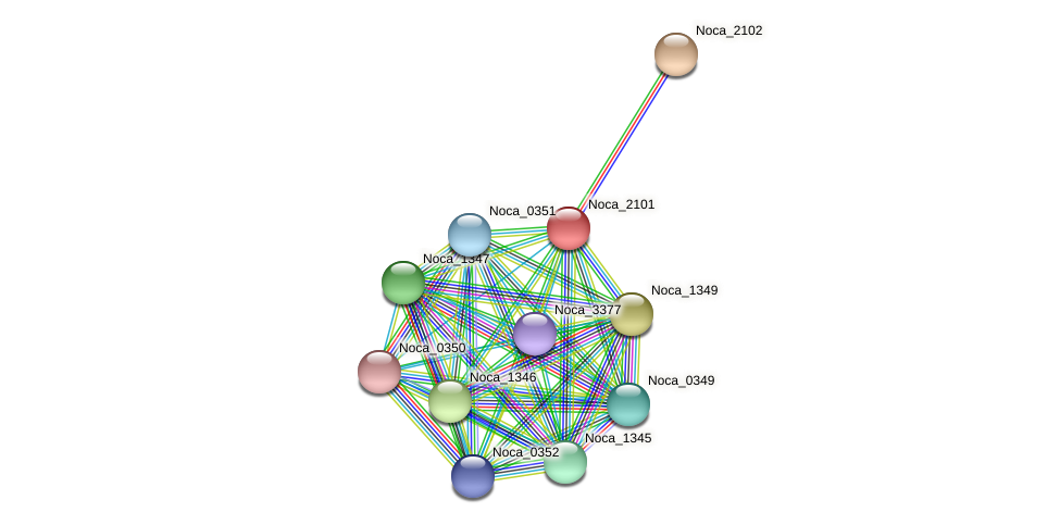 Noca_2101 protein (Nocardioides sp. JS614) - STRING interaction network