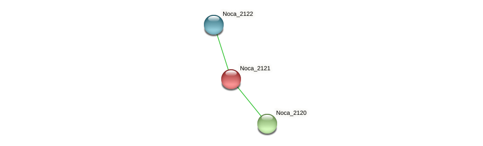 Noca_2121 protein (Nocardioides sp. JS614) - STRING interaction network