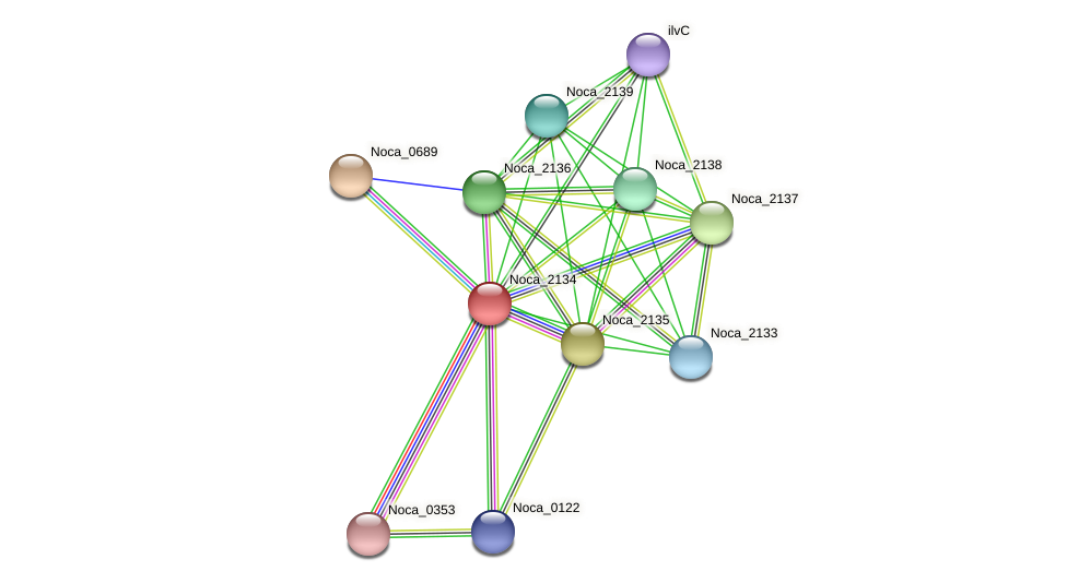 Noca_2134 protein (Nocardioides sp. JS614) - STRING interaction network