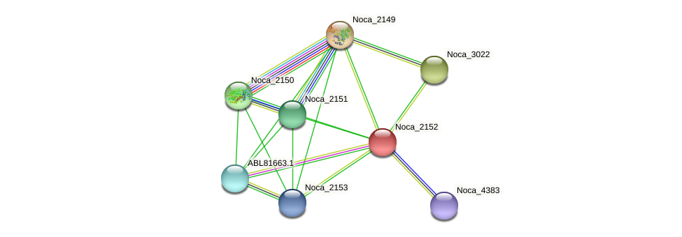 Noca_2152 protein (Nocardioides sp. JS614) - STRING interaction network