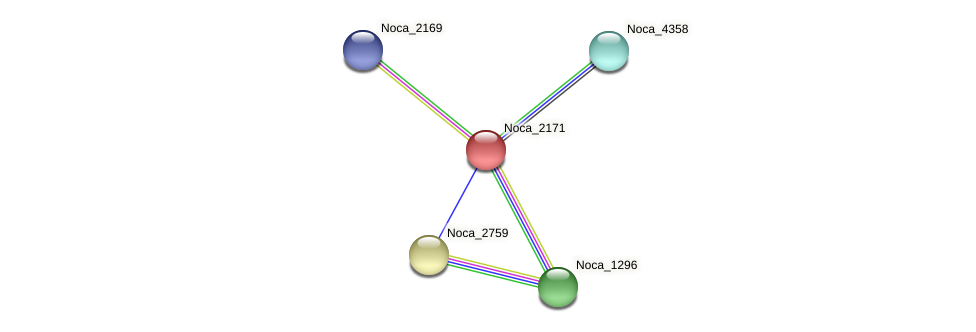 Noca_2171 protein (Nocardioides sp. JS614) - STRING interaction network
