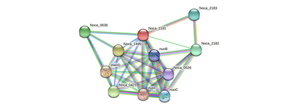 Noca_2181 protein (Nocardioides sp. JS614) - STRING interaction network