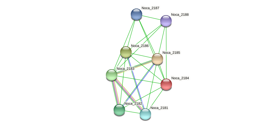 Noca_2184 protein (Nocardioides sp. JS614) - STRING interaction network