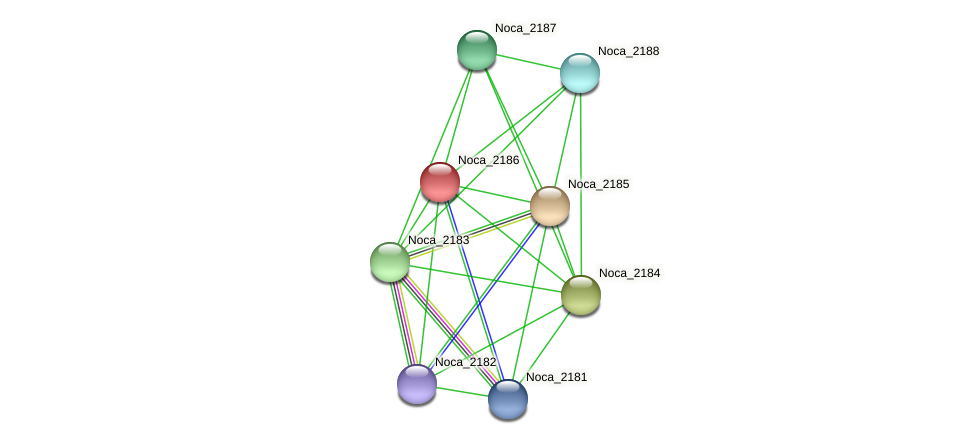 Noca_2186 protein (Nocardioides sp. JS614) - STRING interaction network