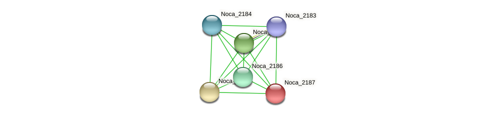 Noca_2187 protein (Nocardioides sp. JS614) - STRING interaction network