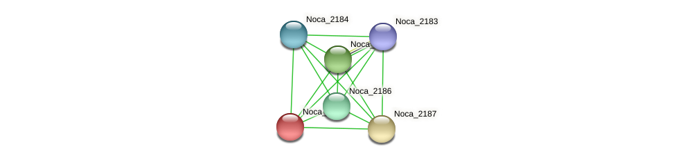 Noca_2188 protein (Nocardioides sp. JS614) - STRING interaction network