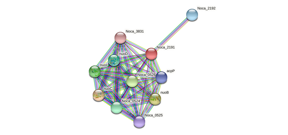 Noca_2191 protein (Nocardioides sp. JS614) - STRING interaction network