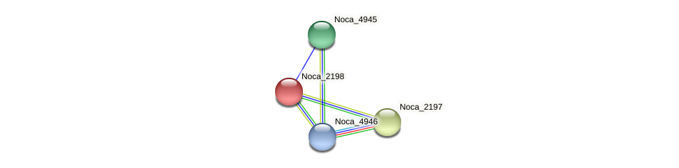 Noca_2198 protein (Nocardioides sp. JS614) - STRING interaction network