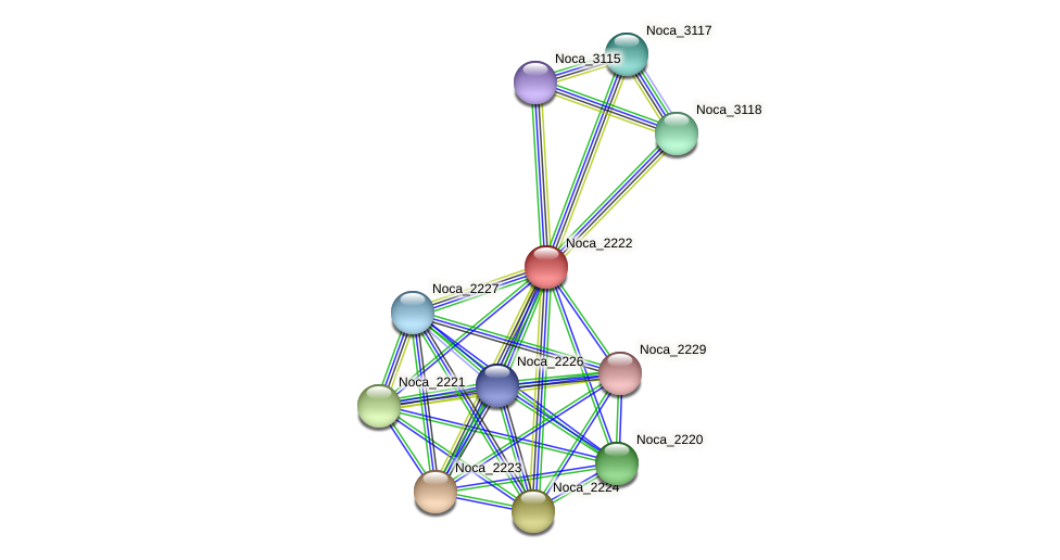 Noca_2222 protein (Nocardioides sp. JS614) - STRING interaction network
