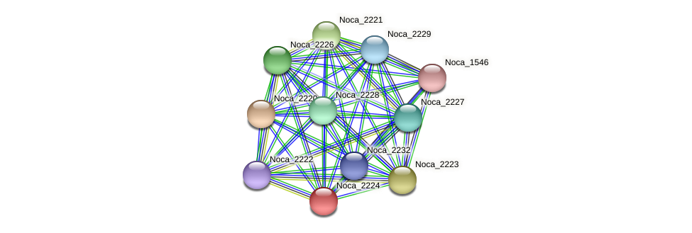 Noca_2224 protein (Nocardioides sp. JS614) - STRING interaction network