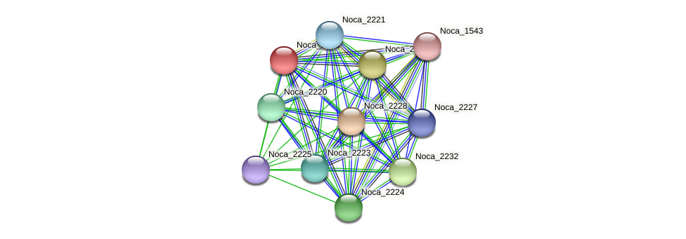 Noca_2226 protein (Nocardioides sp. JS614) - STRING interaction network