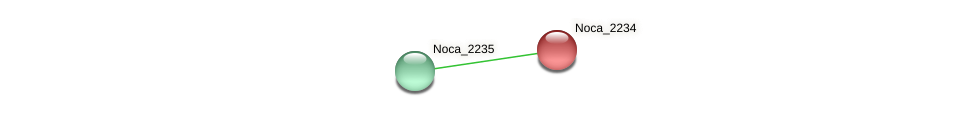 Noca_2234 protein (Nocardioides sp. JS614) - STRING interaction network