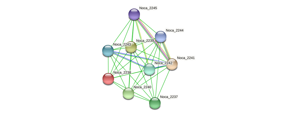 Noca_2238 protein (Nocardioides sp. JS614) - STRING interaction network