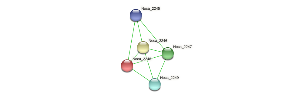 Noca_2248 protein (Nocardioides sp. JS614) - STRING interaction network