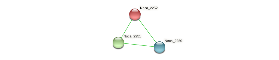Noca_2252 protein (Nocardioides sp. JS614) - STRING interaction network