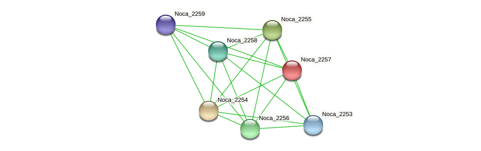 Noca_2257 protein (Nocardioides sp. JS614) - STRING interaction network