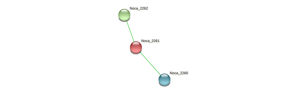 Noca_2261 protein (Nocardioides sp. JS614) - STRING interaction network