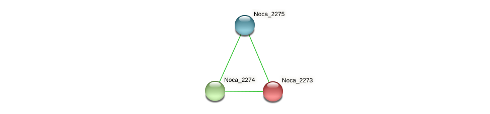 Noca_2273 protein (Nocardioides sp. JS614) - STRING interaction network