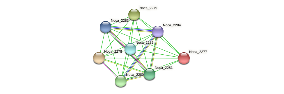 Noca_2277 protein (Nocardioides sp. JS614) - STRING interaction network