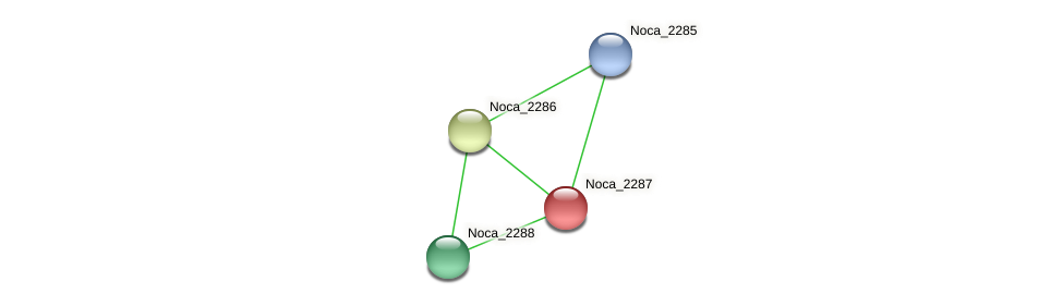 Noca_2287 protein (Nocardioides sp. JS614) - STRING interaction network