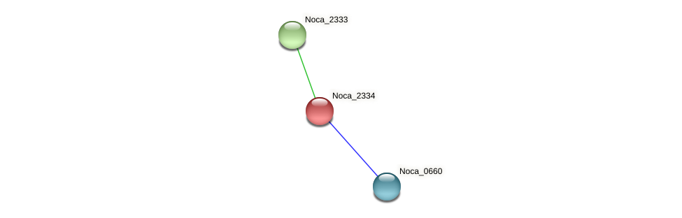 Noca_2334 protein (Nocardioides sp. JS614) - STRING interaction network
