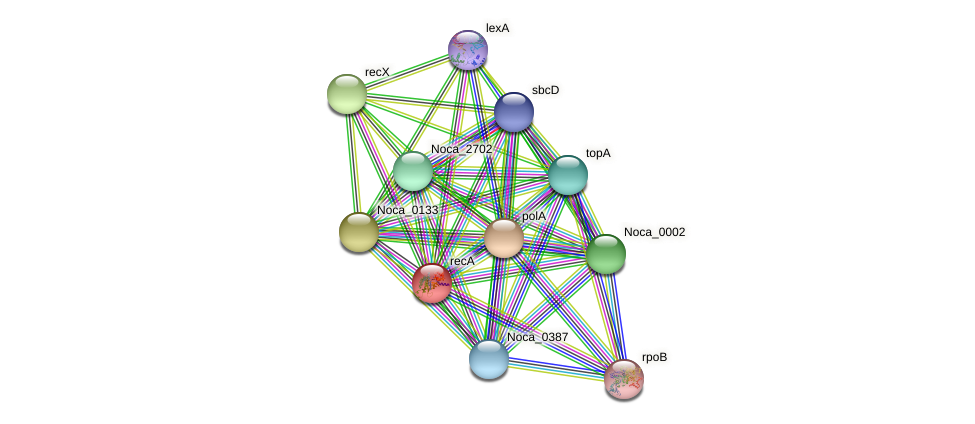 recA protein (Nocardioides sp. JS614) - STRING interaction network