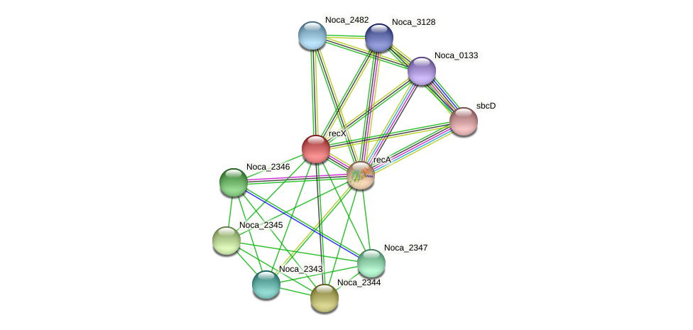 recX protein (Nocardioides sp. JS614) - STRING interaction network