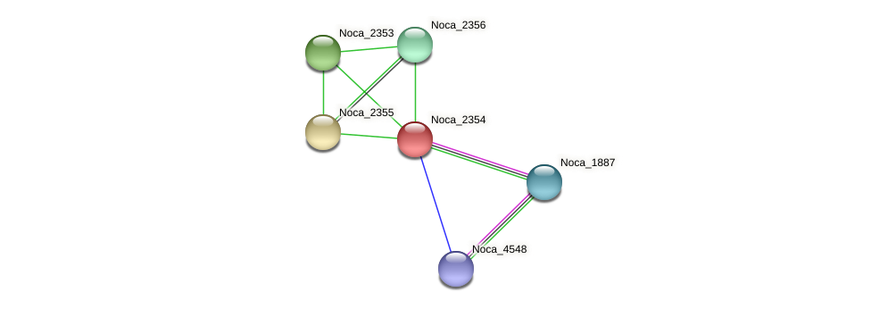 Noca_2354 protein (Nocardioides sp. JS614) - STRING interaction network