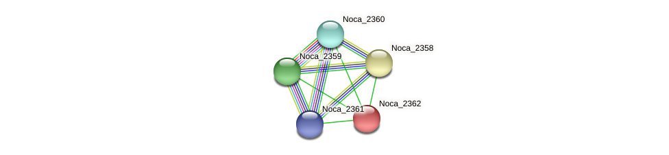 Noca_2362 protein (Nocardioides sp. JS614) - STRING interaction network