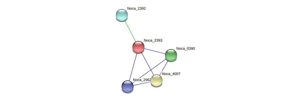 Noca_2393 protein (Nocardioides sp. JS614) - STRING interaction network