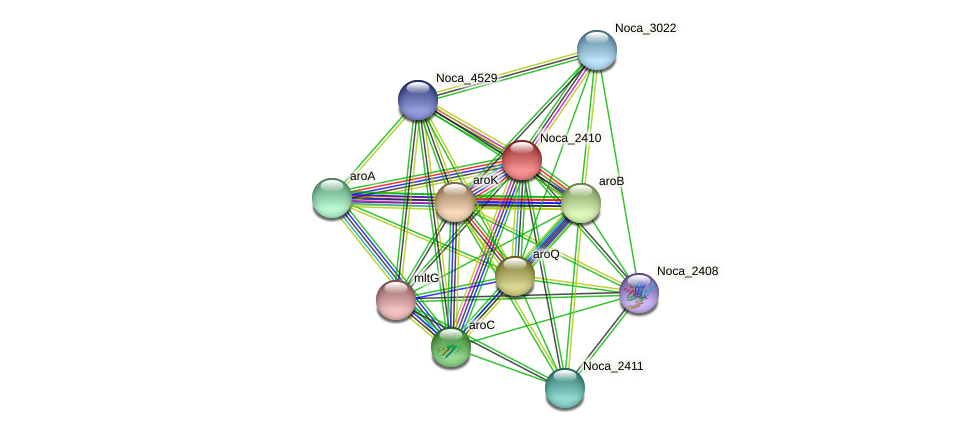 Noca_2410 protein (Nocardioides sp. JS614) - STRING interaction network