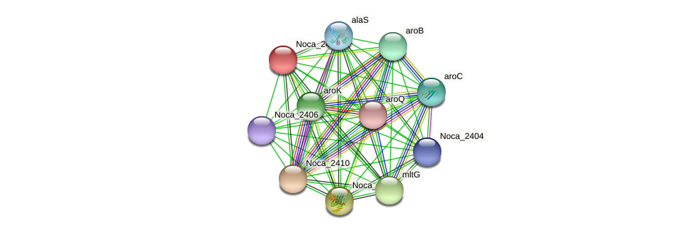 Noca_2411 protein (Nocardioides sp. JS614) - STRING interaction network