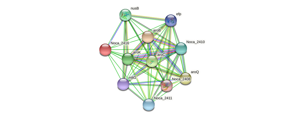 Noca_2416 protein (Nocardioides sp. JS614) - STRING interaction network