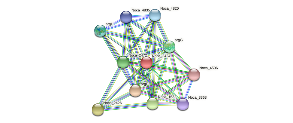 Noca_2424 protein (Nocardioides sp. JS614) - STRING interaction network
