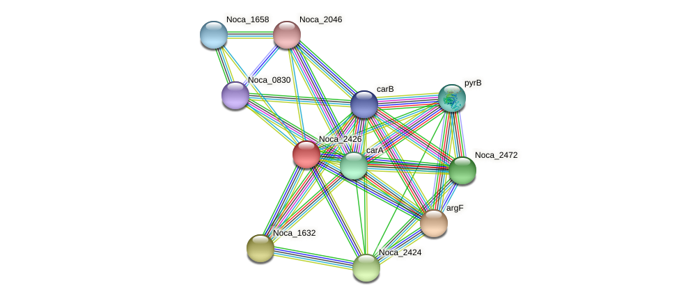 Noca_2426 protein (Nocardioides sp. JS614) - STRING interaction network
