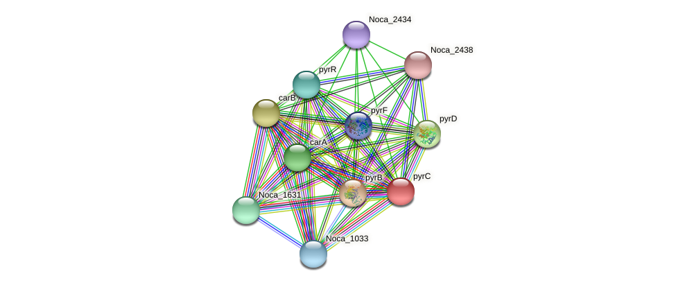 pyrC protein (Nocardioides sp. JS614) - STRING interaction network
