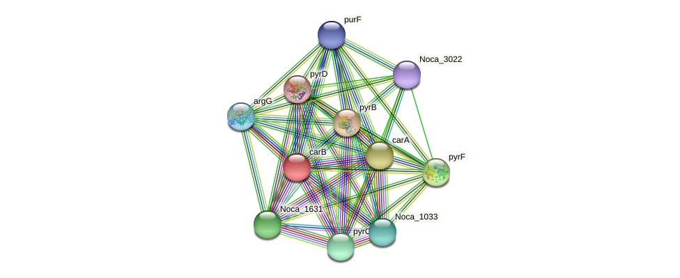 carB protein (Nocardioides sp. JS614) - STRING interaction network