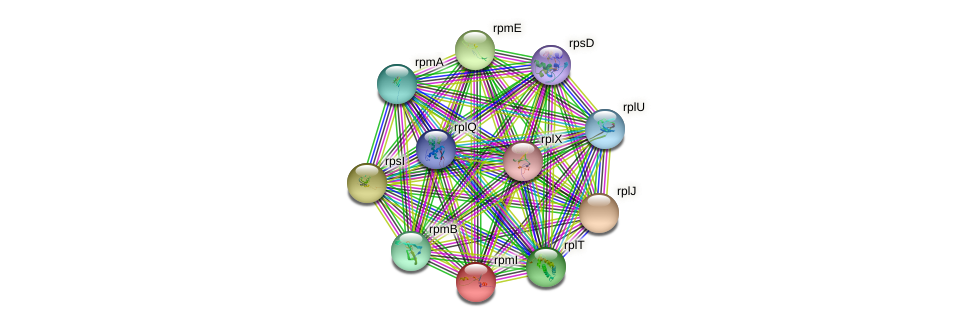 rpmI protein (Nocardioides sp. JS614) - STRING interaction network