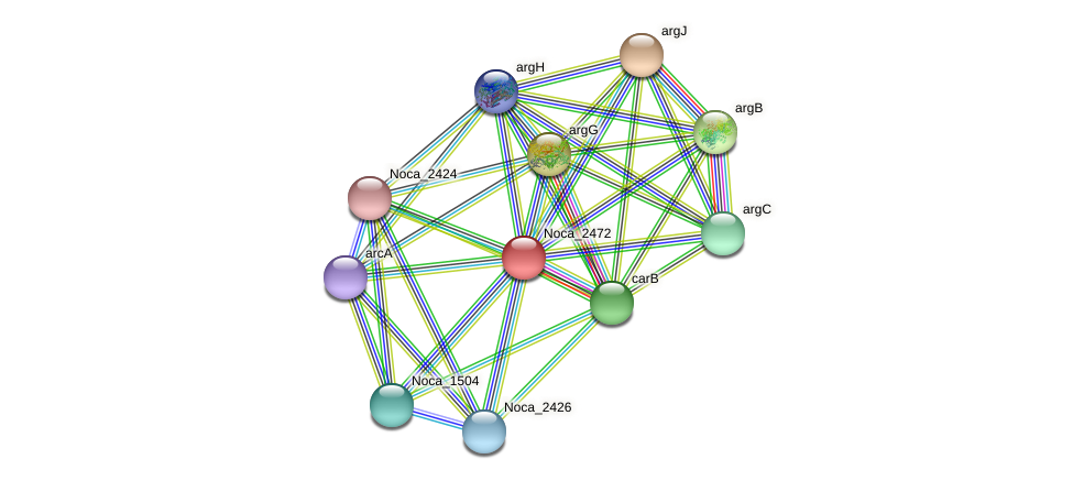Noca_2472 protein (Nocardioides sp. JS614) - STRING interaction network