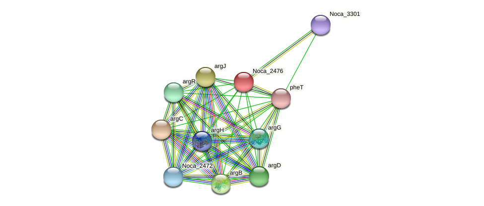 Noca_2476 protein (Nocardioides sp. JS614) - STRING interaction network