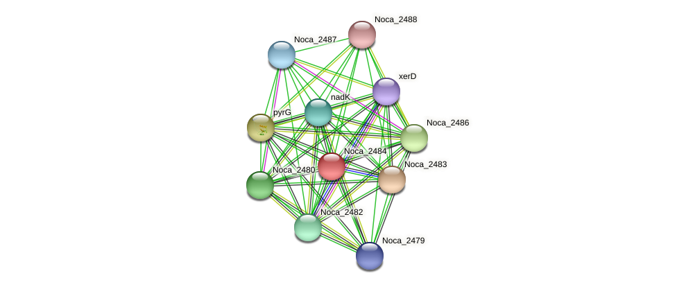 Noca_2484 protein (Nocardioides sp. JS614) - STRING interaction network