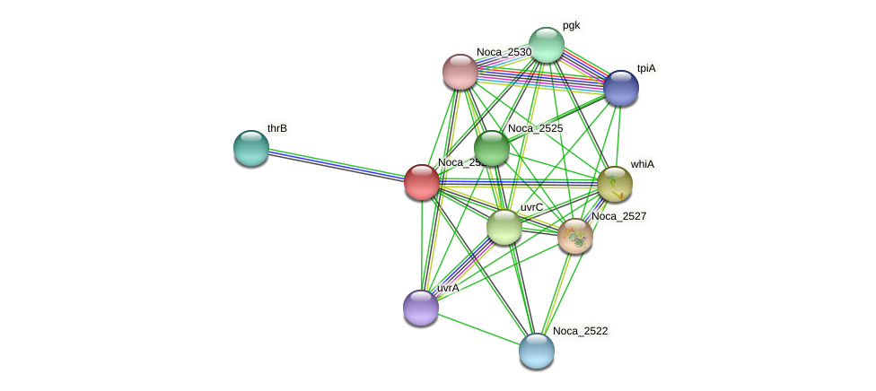 Noca_2528 protein (Nocardioides sp. JS614) - STRING interaction network