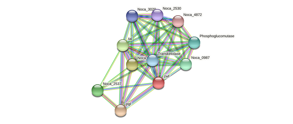 Noca_2538 protein (Nocardioides sp. JS614) - STRING interaction network