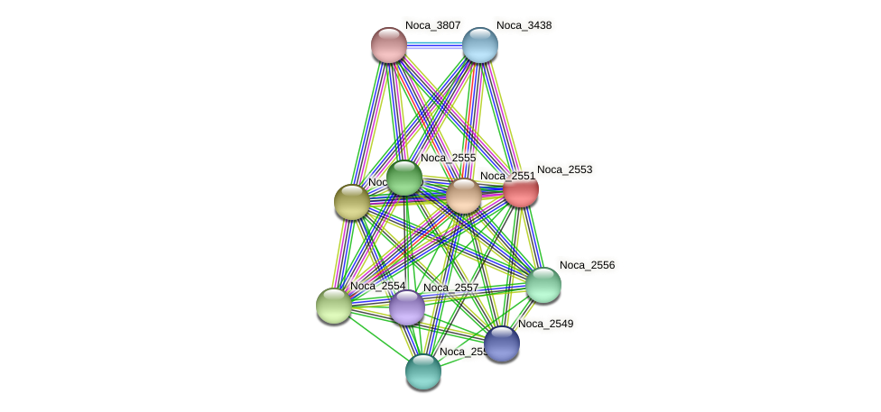 Noca_2553 protein (Nocardioides sp. JS614) - STRING interaction network