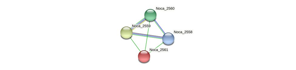 Noca_2561 protein (Nocardioides sp. JS614) - STRING interaction network